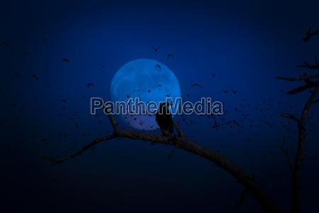 luna cuervo fantasmal espeluznante halloween luna