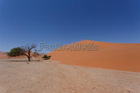 duna 45 en sossusvlei namibia con