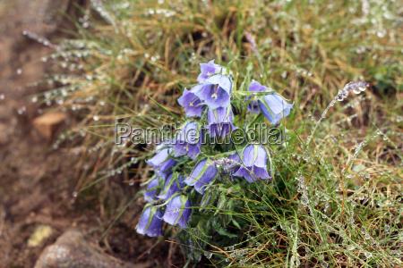 azul hermoso bueno jardin flor planta