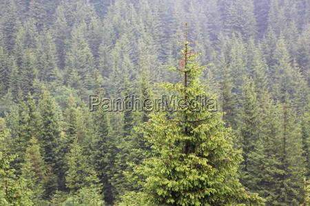 arbol superior parque madera salvaje pino