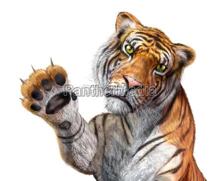 tigre de cerca mirando hacia el