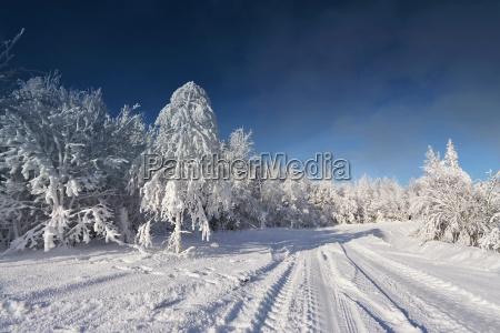 arbol arboles invierno escarcha congelacion nieve