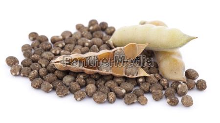 lupin de grano