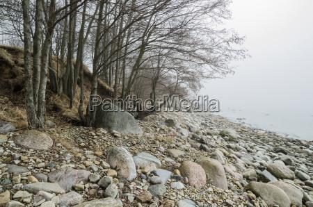 coast of baltic sea in a