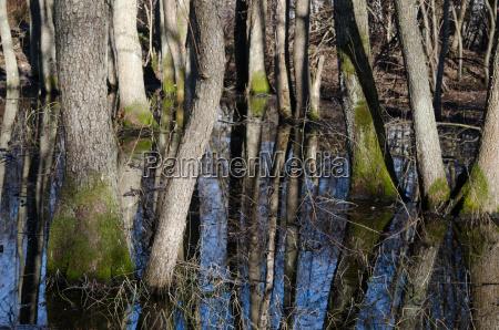 tree trunks in flood waters