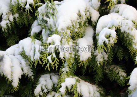 hermoso bueno primer plano invierno nieve