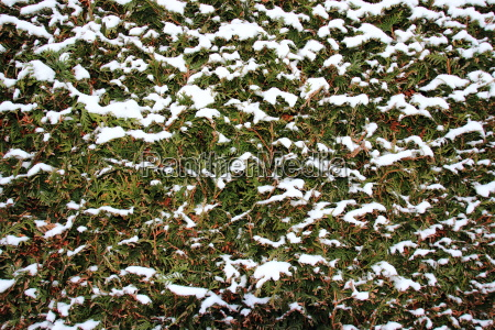 hermoso bueno primer plano jardin invierno