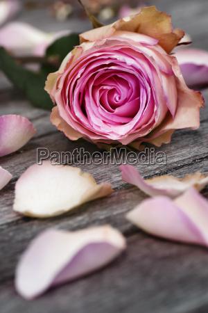 tarjeta de felicitacion con rosas