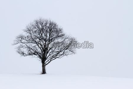 arbol invierno tranquilidad nevada resto nieve