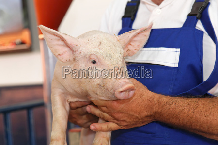 farmer with piglet