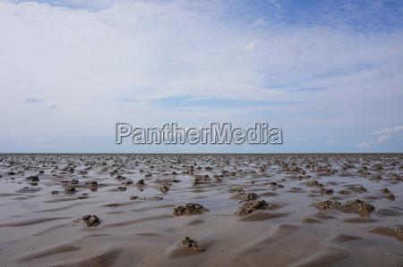 panorama del mar de wadden