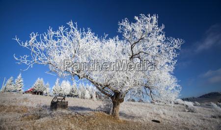 paisaje cubierto escarcha del invierno