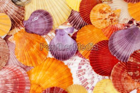 fondo con coloridas conchas de mar