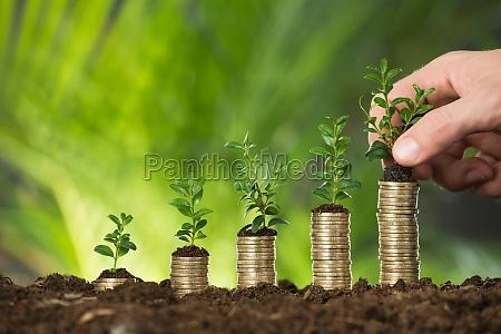 persona mano sosteniendo pequenya planta en
