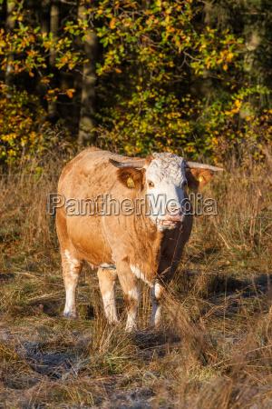 campo de la agricultura del ganado