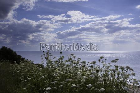 mar baltico en verano con sol