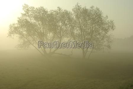 arbol arboles niebla atmosferico tranquilo difuso