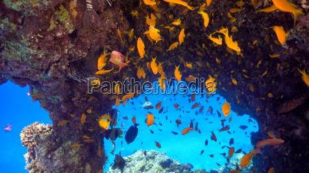 azul salvaje pescado profundo profundidades submarino