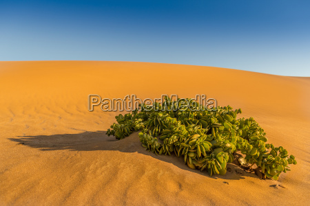 azul desierto verde namibia seco arenas