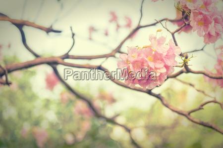 rosa trompeta flor estilo vintage efecto