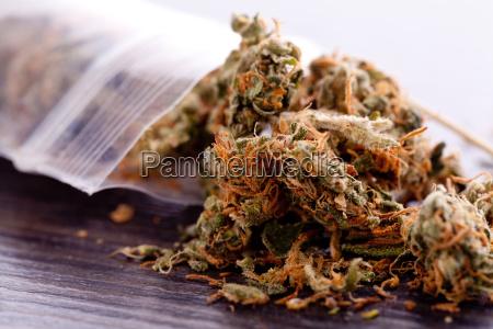 la marihuana de cannabis florece en