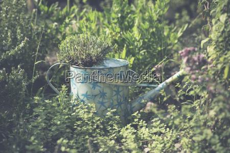 color jardin verano veraniego camara alemania