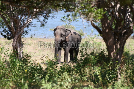 animal mamifero elefante safari naturaleza