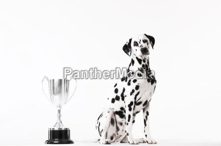 perro sentado por trofeo