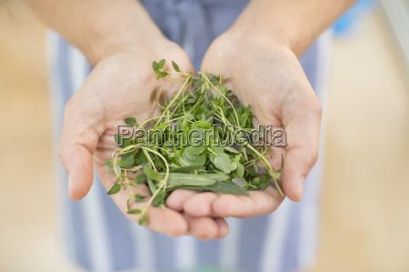 manos sosteniendo manojo de hierbas