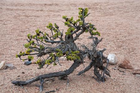desierto verde africa namibia arbusto escaso