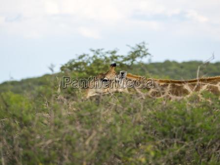 paseo viaje animal mamifero parque nacional