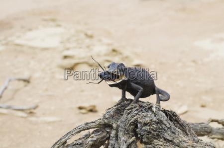 paseo viaje desierto animal insecto reptil