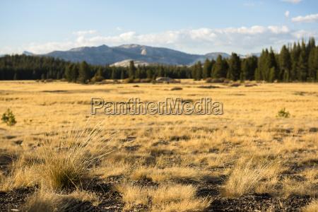 vista del paisaje pristino en tolumne