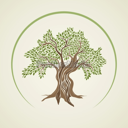 vector illustration of olive tree