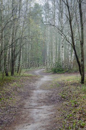 foggy spring landscape with footpath in