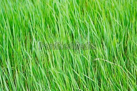 primer plano hoja prado hierba cesped