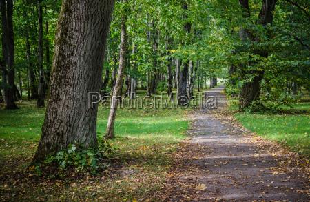 alley in old autumn park autumn