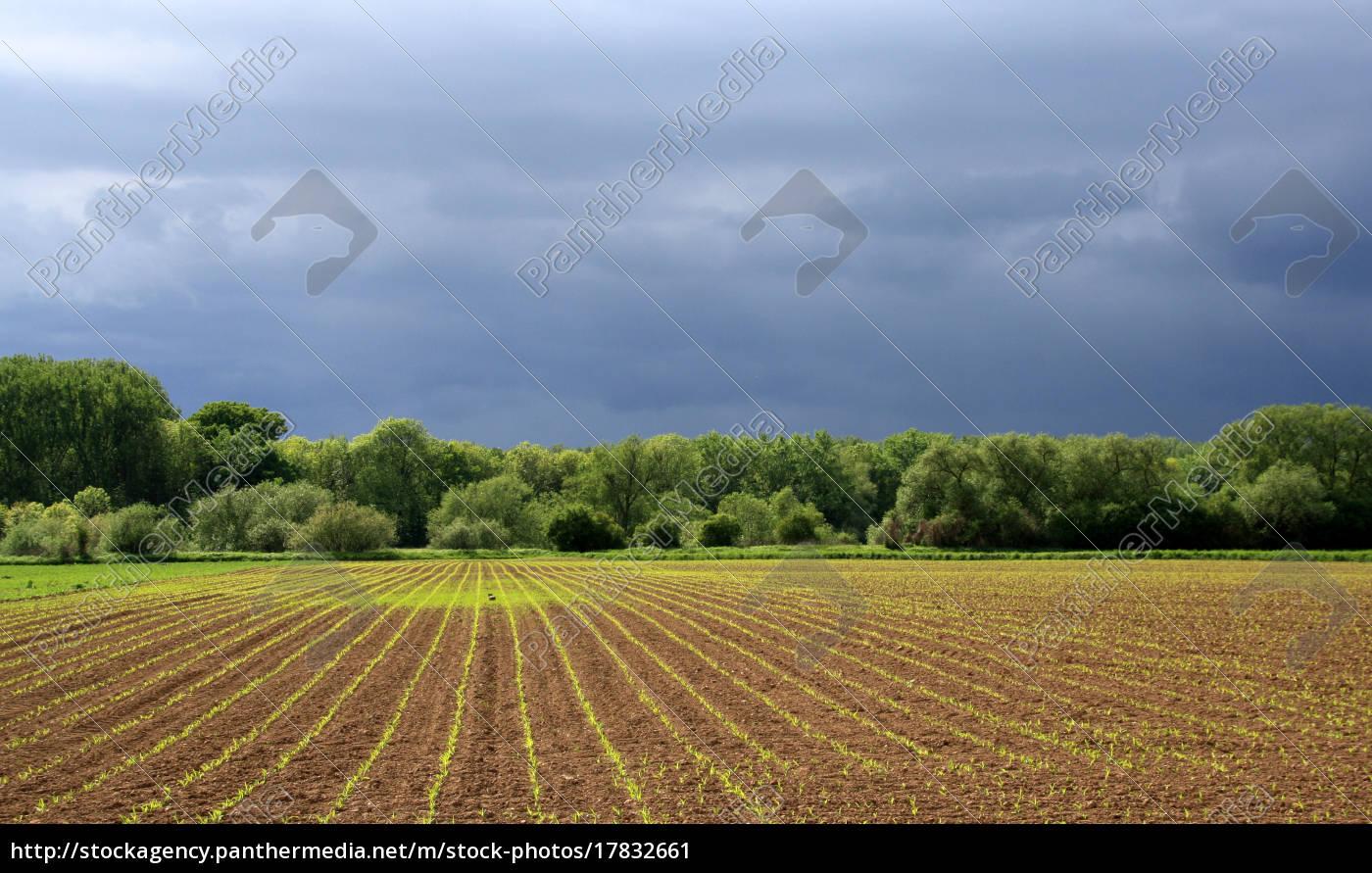 que, la, lluvia, traiga, bendiciones - 17832661