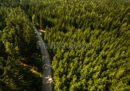 arbol ver paisaje naturaleza bosque