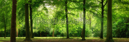 panorama of forest in the dreamy