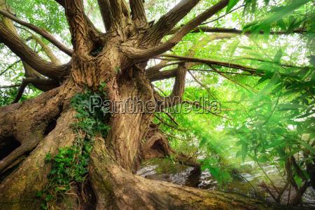 impresionante tronco de arbol en luz