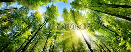 glamorous sunshine on green treetops in