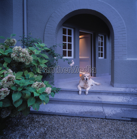 dog lying on front porch of