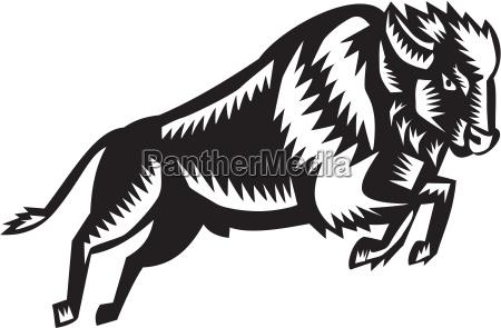 american bison bufalo saltando woodcut