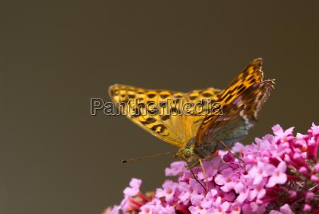insecto flor planta los insectos marron