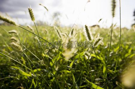 primer plano de las hierbas largas