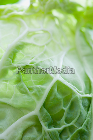 close up of a cabbage