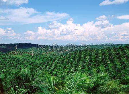 vasto campo verde
