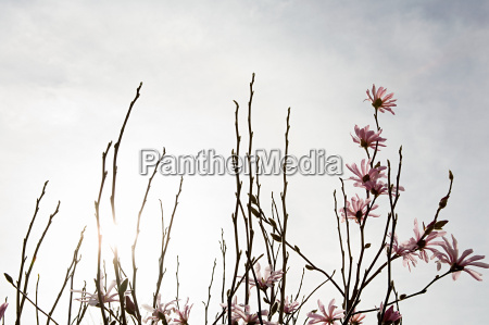 blossom on branches