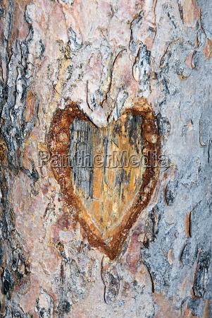 madera al aire libre dia de